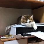 プリントアウトされるのを待つ子猫がかわいい 秀吉バージョン