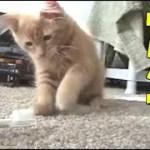 【動物ハプニング】猫vs〇〇〇!?世界で再生され愛されるおもしろ動物 Funny&Fail cat 【Twitterで話題】