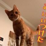 かわいい子猫とかくれんぼ鬼ごっこしてみた!