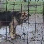 【感動実話】風雪と孤独に耐えた10年間。一度も愛されたことがなかった老犬の救出物語