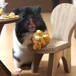 めっちゃおいしそうにサツマイモパフェを食べるおもしろ可愛い癒しハムスター! It looks deliciously Funny hamster eating sweet potato parfait