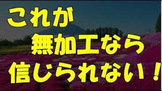 海外の反応 日本の富士芝桜の景色がすごい、美しすぎる、「これが無加工で現実だなんて信じられない!」と海外感動