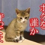 かわいい子猫が突然お家にやってきた-その時、先住猫達は・・・?!5日目-kitten came to our house 6