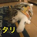 ビールの箱にすっぽり収まり過ぎた子猫【猫】【かわいい】