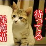 かわいい子猫が突然お家にやってきた-その時、先住猫達は・・・?!8日目-kitten came to our house 10