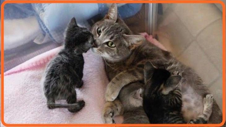 【感動】後ろ足が麻痺した妊娠中の猫が保護されるが、出産後に安楽死を迫られ…【世界が感動!涙と感動エピソード】