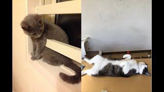 猫ちゃんたちのGW(ゴールデンウィーク)がじわじわ面白い♡~Cats' GW (Golden week) is interesting.