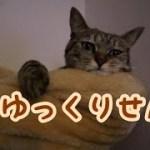 まったりはっちゃん [子猫][可愛い]