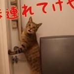 [子猫] 散歩に行きたくてたまらない子猫さん [可愛い]