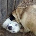 インターネット上で一番ホットなビデオ♥面白い動物♥犬、猫、動物の面白い瞬間#36