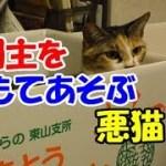 かわいい猫とおもしろ楽しく遊ぼう12-ママに激オコ!された編
