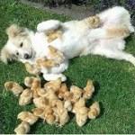 インターネット上で一番ホットなビデオ面白い動物犬、猫、動物の面白い瞬間#27