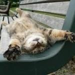 「絶対笑う」最高におもしろ犬,猫,動物のハプニング, 失敗画像集 #70