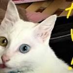 ビックリ神猫さんとホノボノ姉弟 【猫さんと姉弟はお友達】