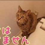 トイレに可愛い侵入者がいました [子猫][保護猫][可愛い]