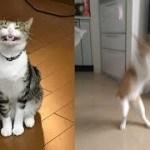 猫ちゃんの顔の表情がヤバくて面白い件w~The facial expression of the cat is interesting.