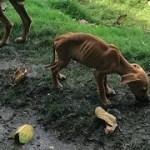 【感動】旅行先でガリガリの犬に出会った少女。 何とか助けたいと決意し…
