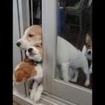 インターネット上で一番ホットなビデオ♥面白い動物♥犬、猫、動物の面白い瞬間#65