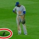 【放送事故】野球の試合中に子猫が乱入するハプニング!