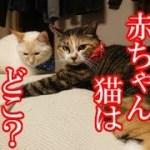 かわいい子猫が突然お家にやってきた-その時、先住猫達は・・・?!3週間目4-kitten came to our house 18