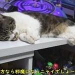 テレビの前でうたた寝する猫が可愛い♥脱力しきった姿がかわいいリキちゃんを観察【リキちゃんねる 猫動画】Cat video キジトラ猫との暮らし