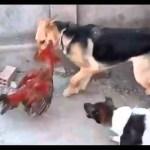 インターネット上で一番ホットなビデオ♥面白い動物♥犬、猫、動物の面白い瞬間#55