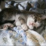 ビックリ、裏山から野良の子猫ちゃんがやって来た~(5)A stray kitten came from the mountain(5)【いなか猫1773】japanese funny cat