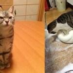 猫ちゃんとの戦いに奮闘する毎日がじわじわ面白いw~Everyday I struggle to fight against cats is interesting.
