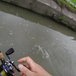 日本で一番面白い!〇〇〇釣りをお見せしますよっ!