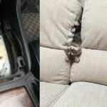 そこにいるのかよw想像を超えた驚きの場所にいた猫ちゃんがじわじわ面白いw~A cat who was in a surprised place beyond imagination.