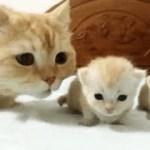 「猫かわいい」 すごくかわいい子猫 – 最も面白い猫の映画 #221
