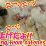 """産声上たよ!!超絶可愛い!赤ちゃん仔猫の誕生!(^^♪U~~凄いかわいい子猫が4匹産まれた日""""How cute!"""" New Born Cute Kittens❤"""