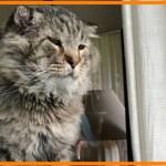 【感動】10年間、野良猫として生きてきた猫。病気を患い人間からのケアを受けると変化が…【世界が感動!涙と感動エピソード】