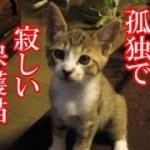 かわいい子猫が突然お家にやってきた-その時、先住猫達は・・・?!4週間目-9kitten came to our house 29