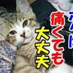 かわいい猫とおもしろ楽しく遊ぼう15-顔面をぶつけながらジャンプする子猫とは?!