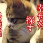 かわいい子猫が突然お家にやってきた-その時、先住猫達は・・・?!4週間目5-kitten came to our house 25