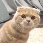 掃除機の接近にビックリ🐱 吸われたくなくて「シャーッ」しちゃう猫ちゃん💖【PECO TV】