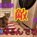 洗濯機を不思議そうに見つめるかわいい猫!