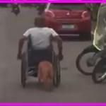 【感動】下半身不随の飼い主の車椅子を懸命に押す犬の姿に胸が熱くなる…【世界が感動!涙と感動エピソード】