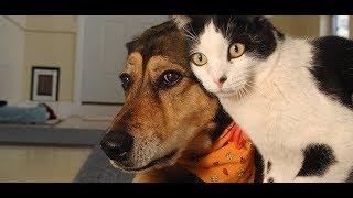 絶対笑う」最高におもしろ犬,猫,動物のハプニング, 失敗画像集 #25