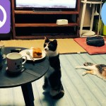 猫ちゃんのご飯を狙ってくる姿がじわじわ面白い件w~It is interesting to see a cat targeting rice.