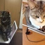 【危険】パソコンを襲う猫ちゃんが驚異だけど、じわじわ面白い件w~Cats attacking PCs are wonderful, but interesting.