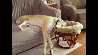 「絶対笑う」最高におもしろ犬,猫,動物のハプニング, 失敗画像集 2018#11