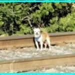 【感動】道端を怯えながらさまよう1匹の犬。その姿を見たある女性の直感が奇跡をもたらす!【世界が感動!涙と感動エピソード】