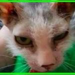 【感動】他の猫と違う姿をしていたために命の危機にさらされていた子猫。ひとりの女性に引き取られ、愛情と幸せな生活を手に入れる!【世界が感動!涙と感動エピソード】