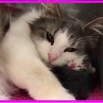 【感動】妊娠を理由に飼い主に見捨てられた耳の不自由な猫。心優しい里親さんの元で出産し、懸命に我が子を守る姿に胸が熱くなる…【世界が感動!涙と感動エピソード】