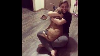 感動の再開🐶数年ぶりに飼い主に会う犬の反応 – 2018まとめ#2