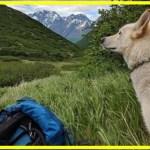 【感動】見知らぬ犬の無償の愛!どこからともなく現れた犬は、ハイカーに寄り添い2度も危機的状況から救う!【世界が感動!涙と感動エピソード】