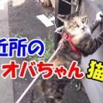 猫なのに近所のオバちゃんのような猫-かわいい猫なのに犬として育てられた猫49