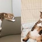 野生を忘れた猫ちゃんがくつろぎすぎて面白いw~A cat who forgot the wild is relaxing and funny.